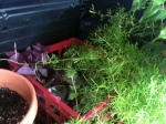 Small Plants inCrate