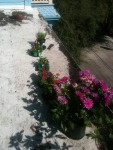Roof / Deck with newflowers