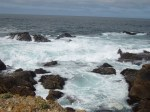 Point Lobos TidePool