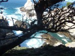 Cypress tree andcove