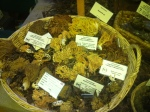 Various Coral Fungi