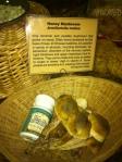Armilleriella Mellea (Honey Mushroom)